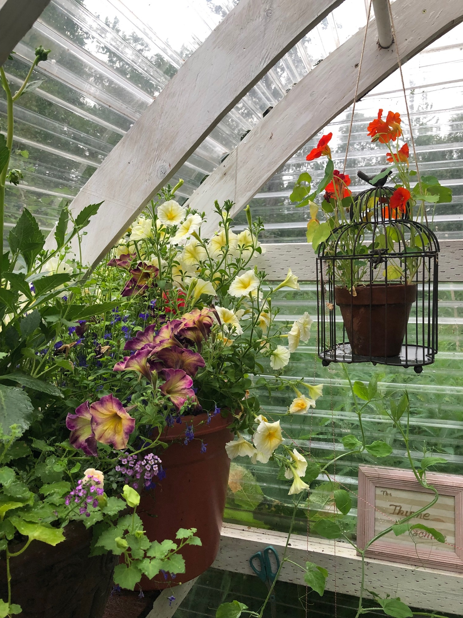 A bird cage sprouts nasturtiums above pots of petunias