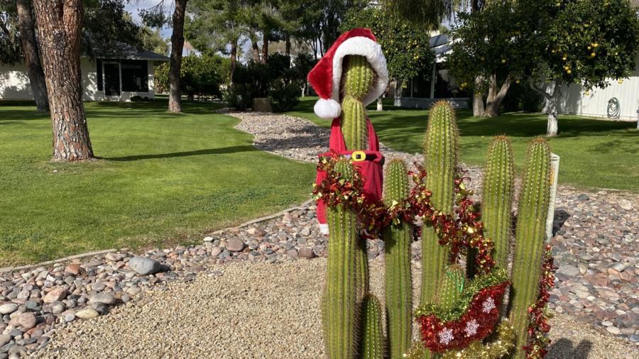 A cactus wearing a Santa hat